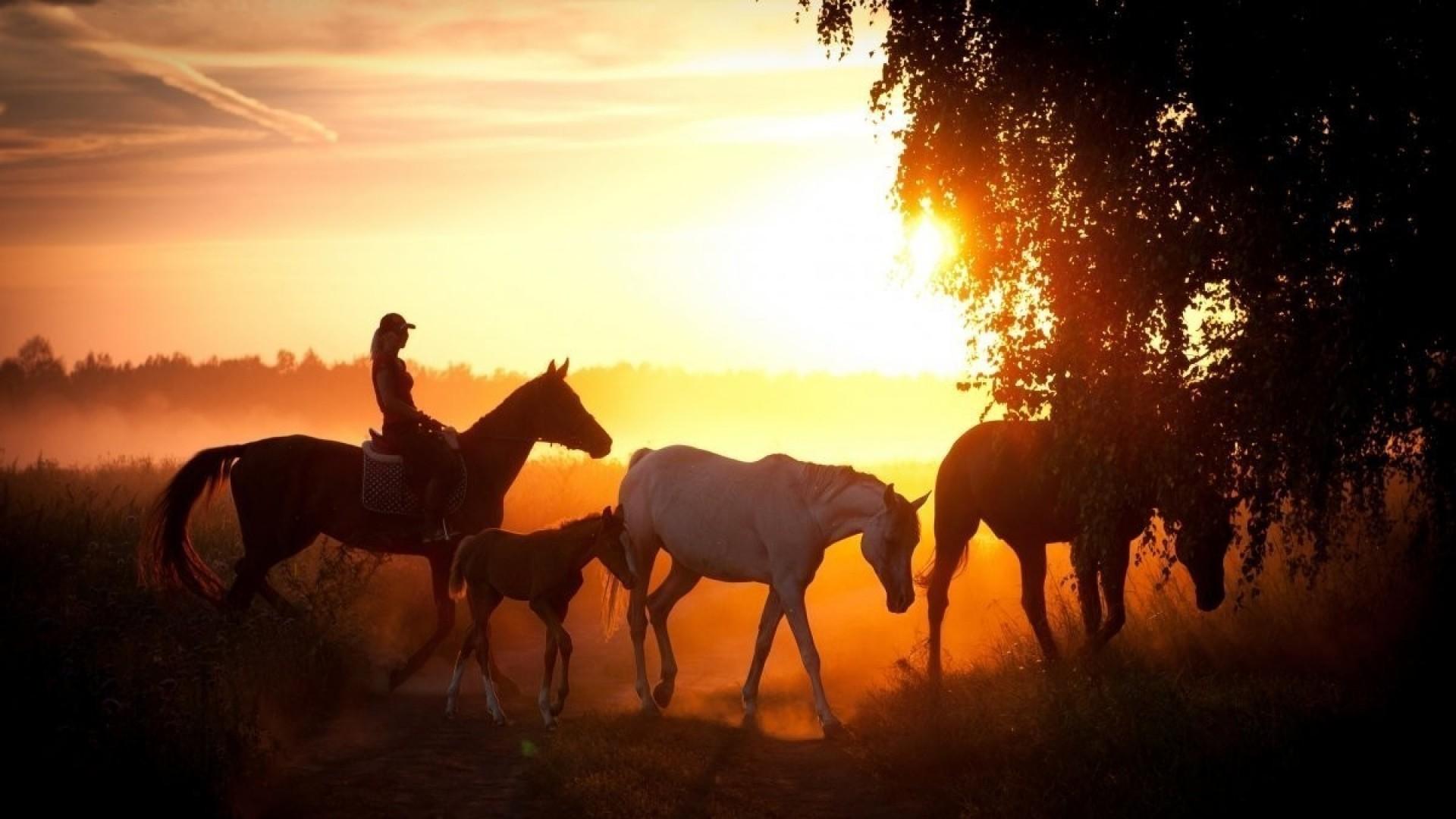 Верховая езда: 4 важных вопроса
