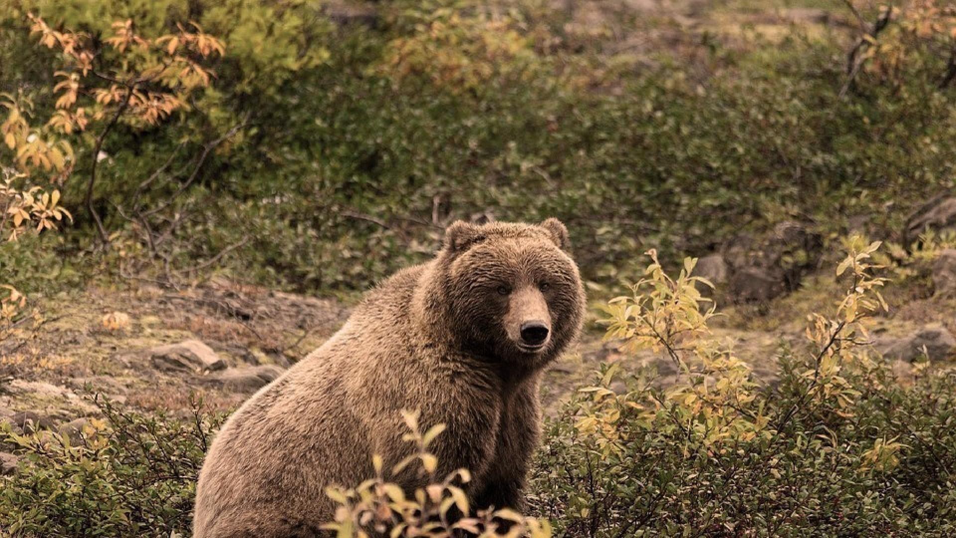 «Медведь»: медитация для преодоления страхов