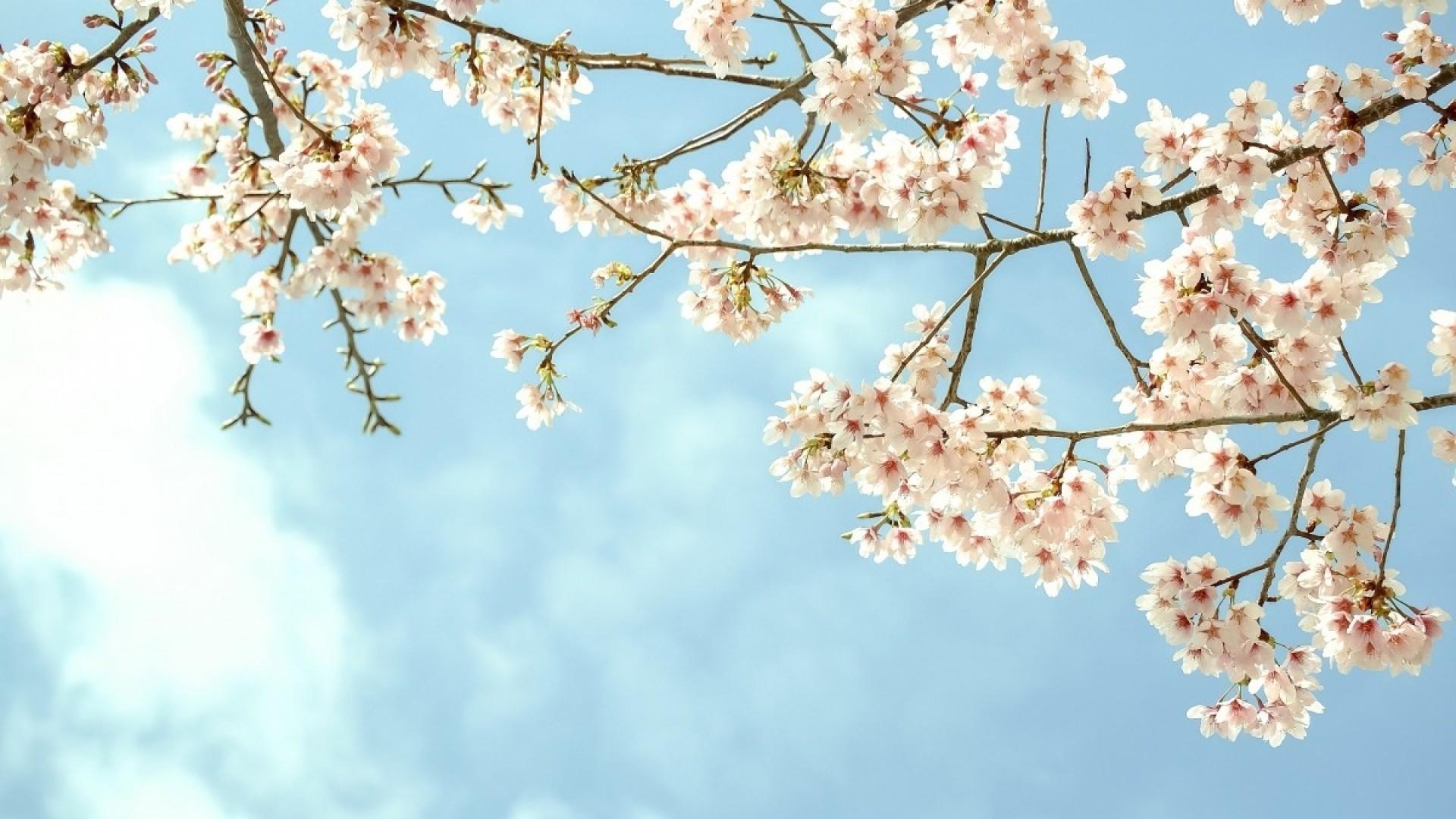 Я смотрю — прорастает из лёгких весна. Это значит, что я победила…