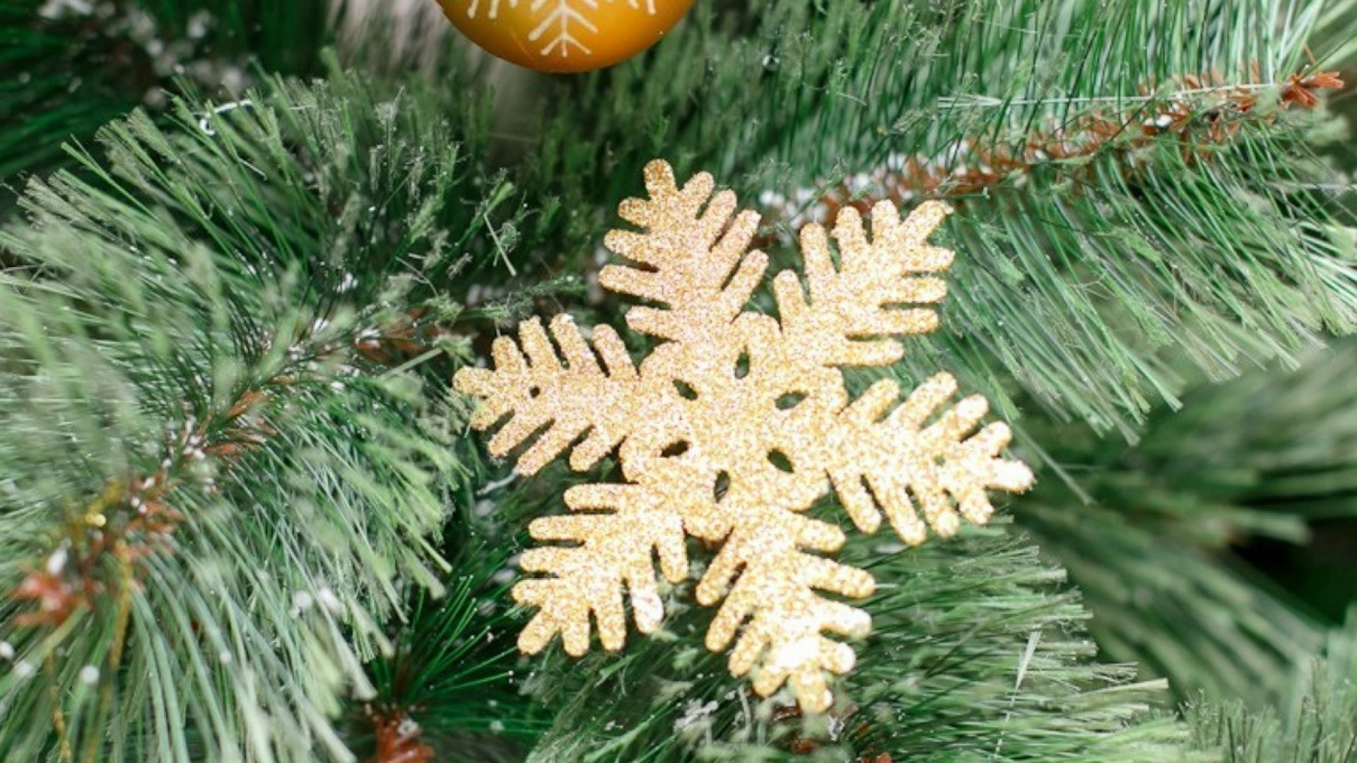 5 новогодних семейных традиций от известных новосибирцев