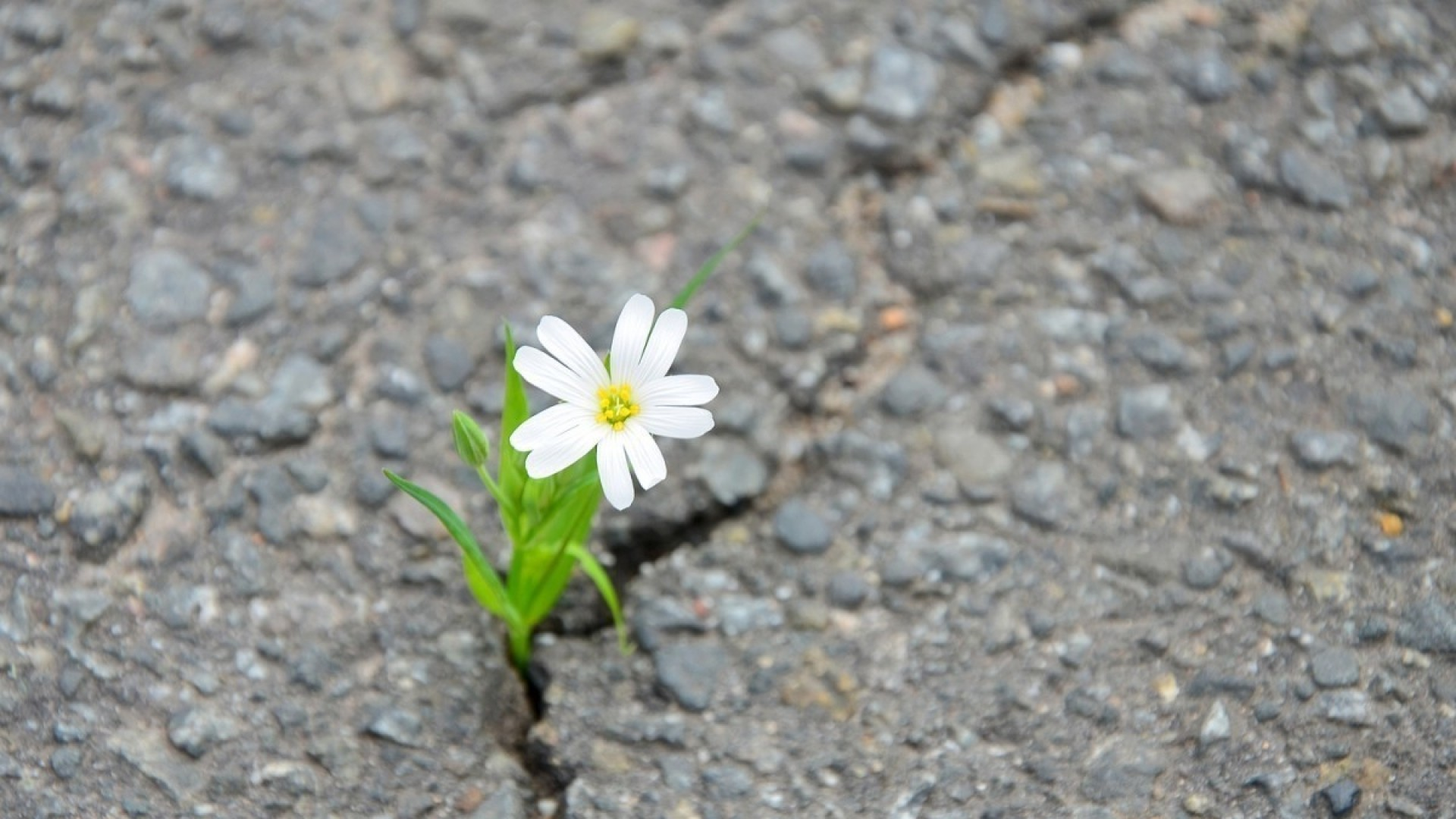 Стихи о том, как мы преодолеваем трудности