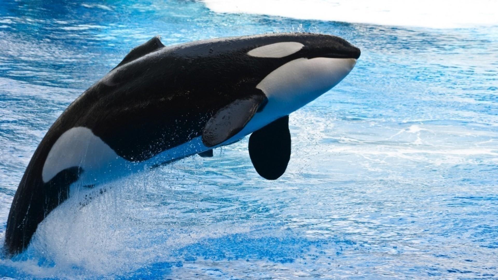 10 интересных фактов о китах