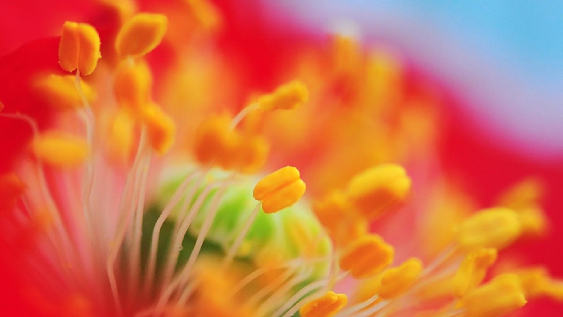 Цветы: 9 макроснимков Павла Мирошникова