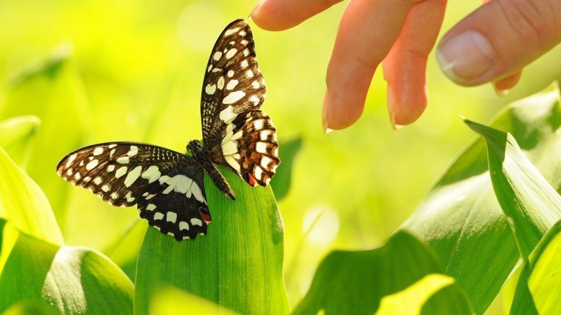 Жизнь в стиле ЭКО: помогать природе и экономить